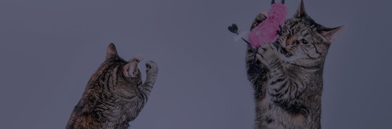 juegos-para-gatos