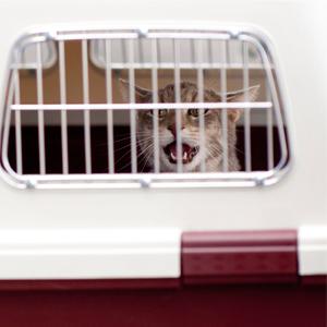 de-mascotas-transporte