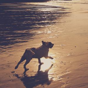 para-perros-productos