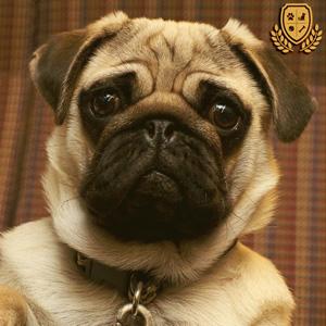 barato-pienso-para-perros