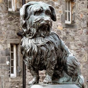 informacion-sobre-perros