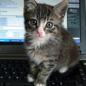 de-animales-online-tienda