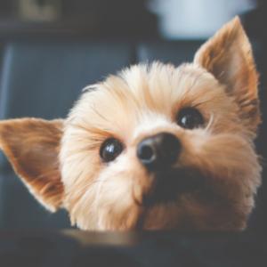 para-cachorros-accesorios