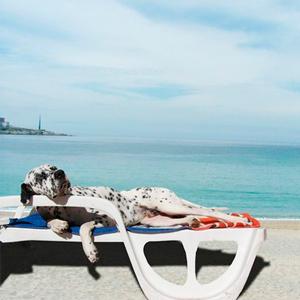 perros-playas-para