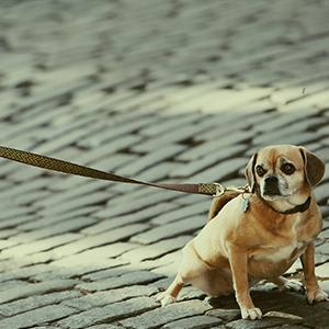 cosas-para-perros