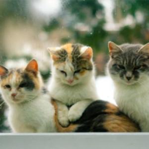 de-gatos-razas