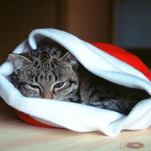 accesorios-para-los-gatos